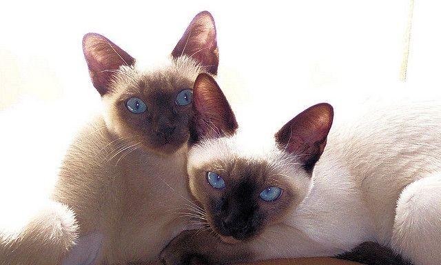 Foto: Flickr.com/Preconscious Eye