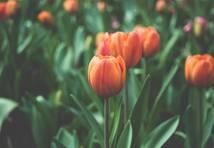 Pavasaris ir klāt! Ko zvaigznes sola tev martā?