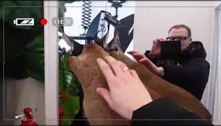 Neiedomājami! Latvijā tirgo ekskluzīvus kaķus, kuru cena ir 10 000 eiro!