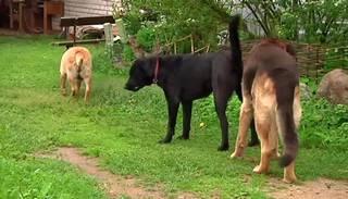Jelgavas novada Zemgales ciemu terorizējot klaiņojoši suņi