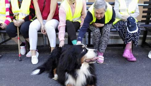 "Sociālās aprūpes centrā ""Zemgale"" atgriežas suņi"