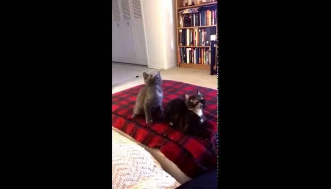 Kaķēni ķer bītu!