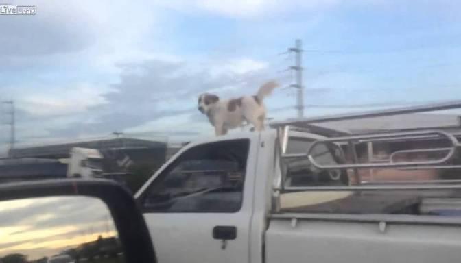 Suns – ekstrēmists