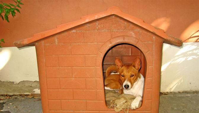 Basenži – suņi, kas nemāk riet