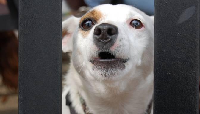 Agresīvs suns smagi sakož četrus gadus vecu meitenīti