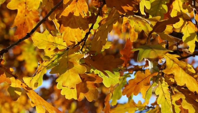 1. oktobra diena būs saulaina, nokrišņi nav gaidāmi