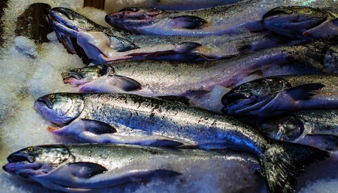 Rīgā no kravas auto izbirst saldētas zivis; Kurzemes prospektā traucēta satiksme