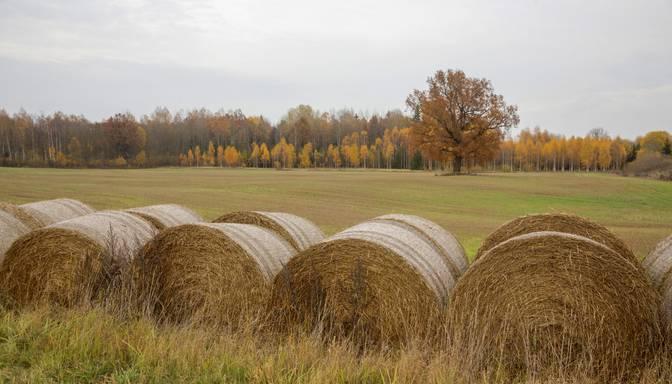 2019.gads Latvijā pagaidām ir siltākais novērojumu vēsturē