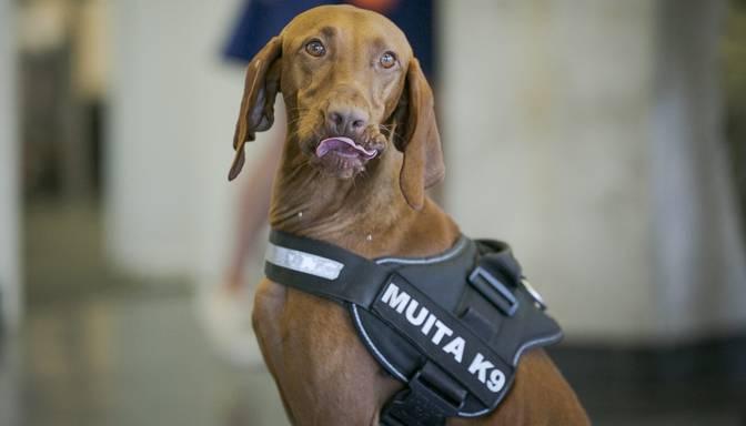 VID par 9000 eiro iegādāsies četrus jaunus darba suņus