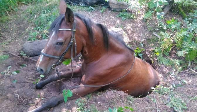 Babītes novadā bedrē iesprūdis zirgs