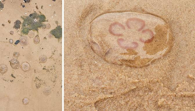 """""""Medūzas """"okupējušas"""" Saulkrastu pludmali!"""" Atpūtniekus satrauc, vai gļotainās radības ir bīstamas?"""