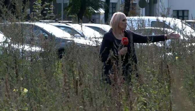 Rīgas centrā nezāles aug griezdamās, bet īpašnieks par to neliekas ne zinis