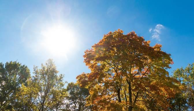 Meteorologi: Šonedēļ gaidāms pat +25 grādu siltums