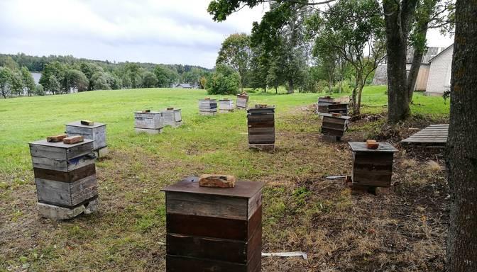 Policija Ludzas novadā atrod 16 nozagtus bišu stropus ar vasarā iegūto medu