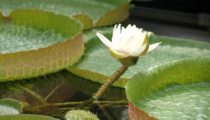 LU Botāniskajā dārzā redzami reti dažādu augu ziedi