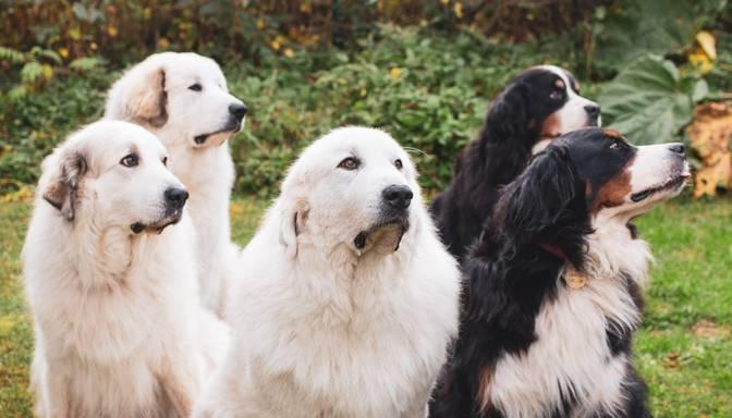 Aicina atbalstīt kucēna centienus kļūt par nākamo suni terapeitu