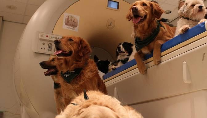 Pētījums: suņi ir tik pat priecīgi ieraudzīt cilvēka seju, cik pakausi