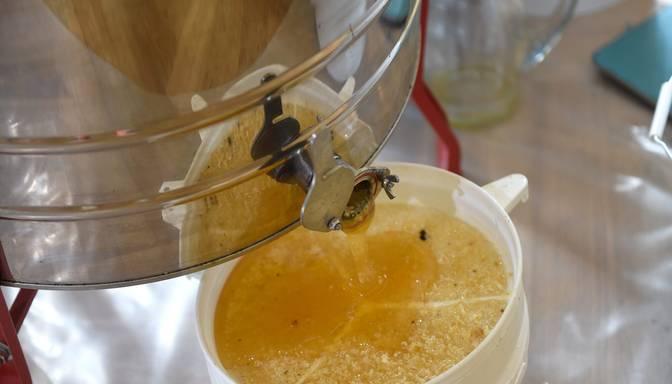 Biškopības kooperatīvs gatavojas pārsūdzēt tiesā VID lēmumu par 11 000 eiro priekšnodokļa neatmaksāšanu