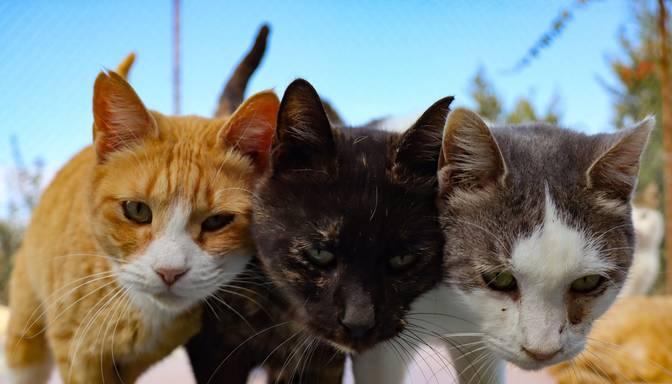 """""""BIOR"""": Nav pierādījumu par Covid-19 izplatību kaķu starpā vai no kaķiem uz cilvēkiem"""