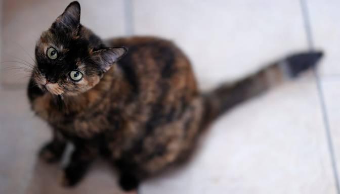 Covid-19: Latvijā pirmo reizi inficēšanās atklāta kaķim