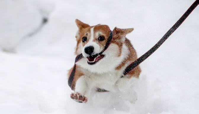 Kā padarīt pastaigu ar suni drošu arī salā? Skaidro eksperts