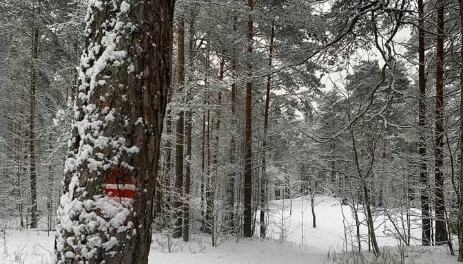 Vandaļi Biķernieku-Šmerļa mežos nodarījuši vērienīgus takas baltsarkanbaltās krāsas marķējuma bojājumus