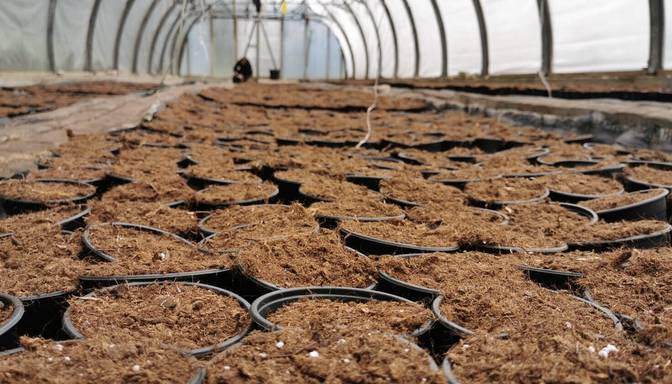 Bažas par kūdras substrāta ražošanas nākotni pēc Eiropas jaunās regulas
