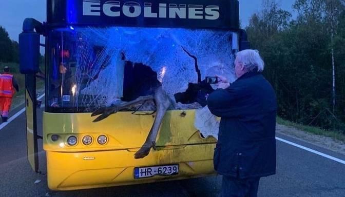 Uz Rēzeknes šosejas autobuss notriecis alni