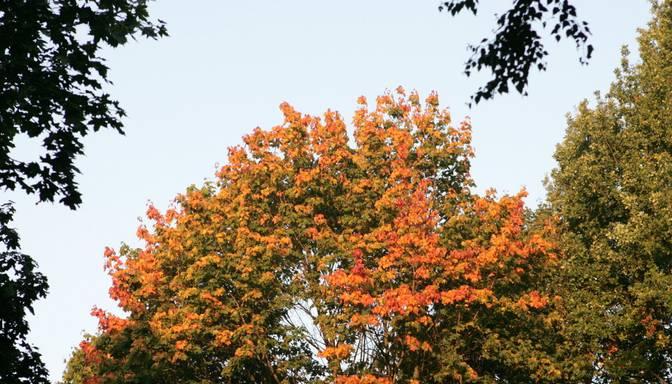 Latvijā būs rudenīgi silta un saulaina diena