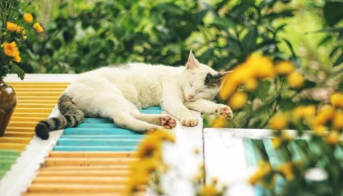 Lauvas izvēlēsies garīgas aktivitātes, Vēžiem jāvairās no darba jautājumu cilāšanas – 18. septembra horoskops