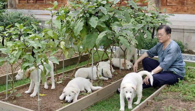 Dienvidkorejas prezidents rosina aizliegt uzturā patērēt suņu gaļu