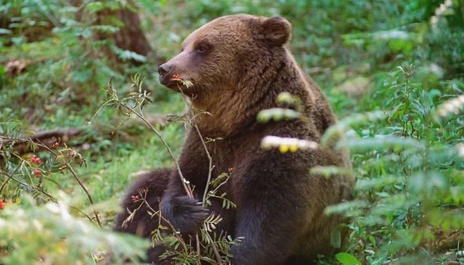 Dabas aizsardzības pārvalde izsniegusi atļaujas lāču aizbiedēšanai Valkas novadā