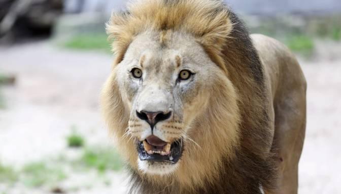 Vērši var piedzīvot kādu vilšanos, Lauvām būs veiksmīgi naudas ieguldījumi – 9. oktobra horoskops